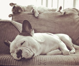 FYI, your dog is probably dreaming about you (and people are losing it)