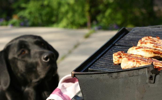 How to keep your pet safe on Australia Day