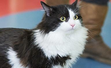 Disabled cat is back on the prowl thanks to his new bionic legs