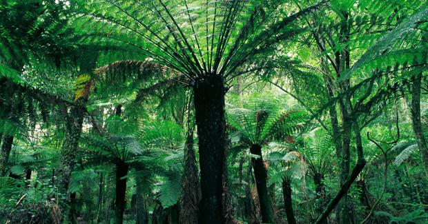 Green Corridors Of Conservation Planned Australian