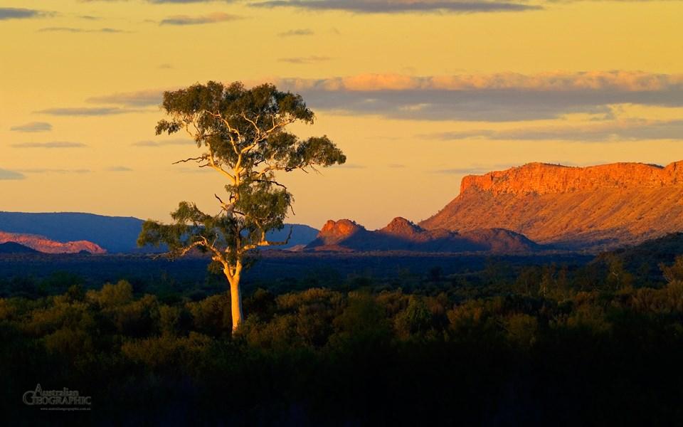 WALLPAPER: Alice Springs Ghost Gum