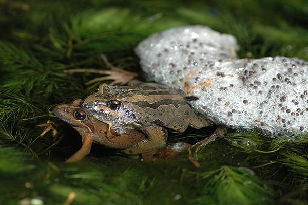 The animals you'll find in an Aussie backyard - Australian ...