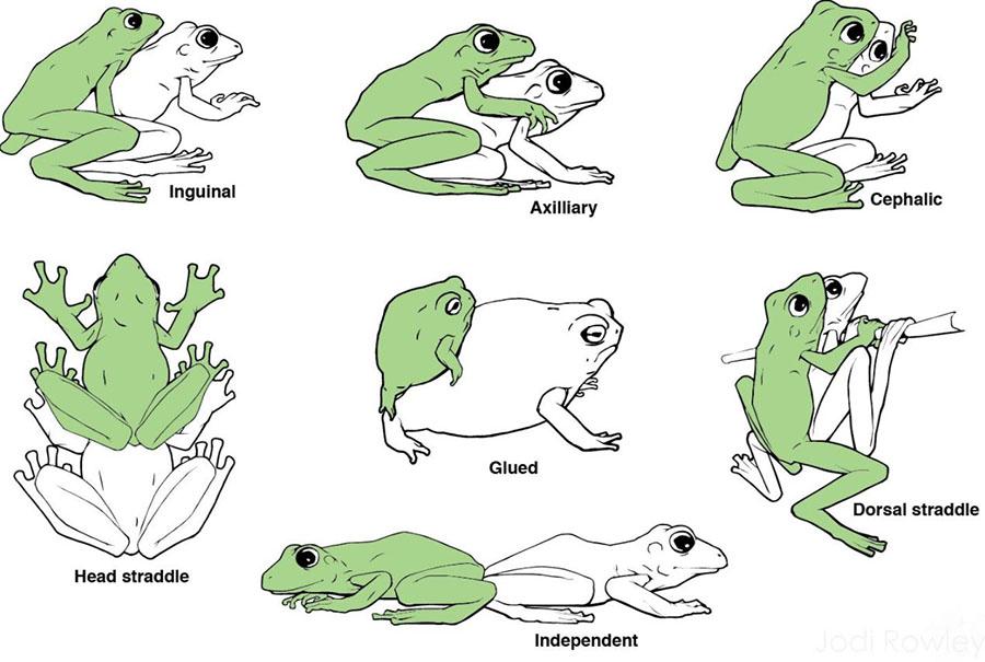 frog live sex