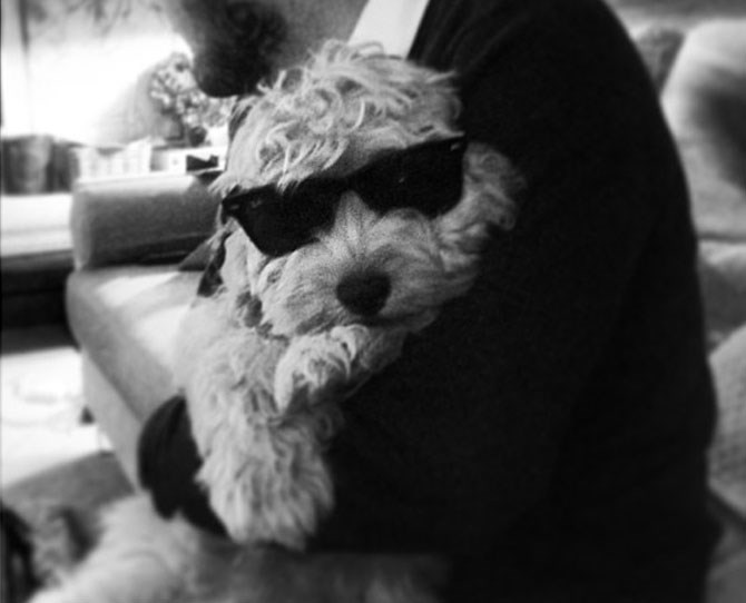 Harry Styles: @harrystyles Harry's cockapoo Colin might not have the coolest name, but he does have his own Ray-Bans.