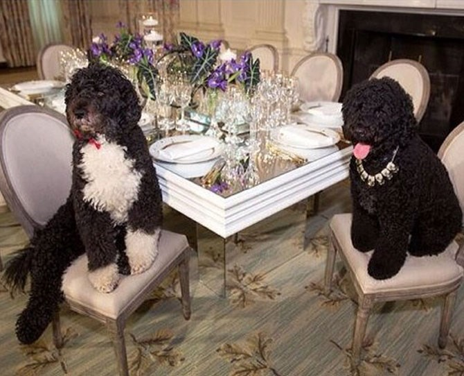 Michelle Obama: @michelleobama We wouldn't expect anything less than high society from the Obama pooches.