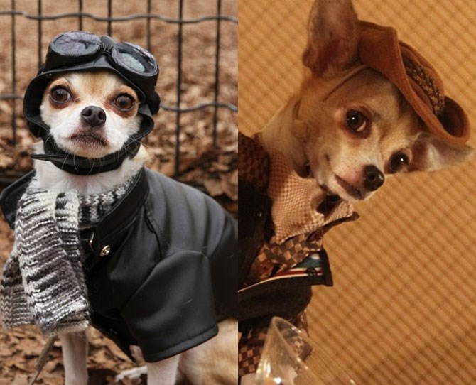 Montjiro: @montjiro Montjiro is probably the classiest pooch around with his sharply tailored, old English gentleman style outfits. He's the kind of dog you would enjoy a glass of fine whisky with, while reading a Dickens novel, while solving murder mysteries. We imagine...