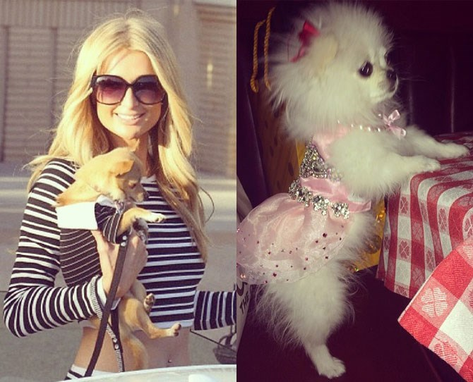 Paris Hilton: @parishilton Paris styles her pets like she styles herself – pink, sparkly and kind of tacky. They pull it off better, though.