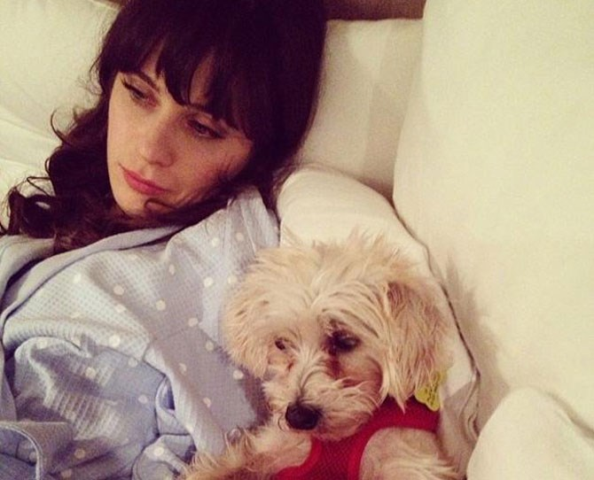 Zooey Deschanel: @zooeydeschanel Zooey and her fluff ball do casual chic while spending some quality couch time together chilling out in their comfies.