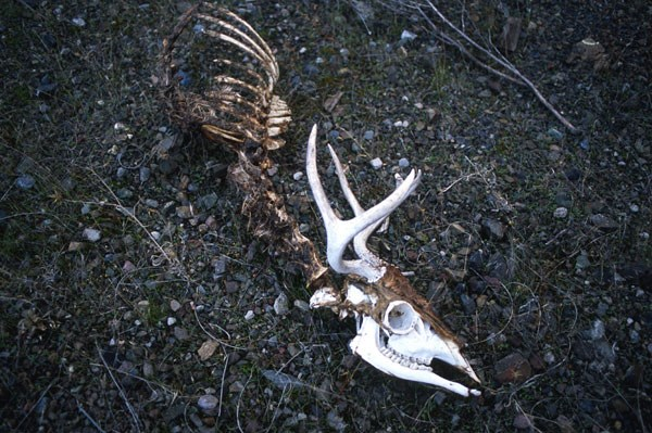 **Road kill** In 2006, a 20-year-old from Wisconsin was accused of having sex with the carcass of a deer that he found lying beside the road, which in turn raised a real philosophical debate. His lawyer denied that he committed bestiality on the grounds that a dead deer wasn't an animal any more. Or is it...?