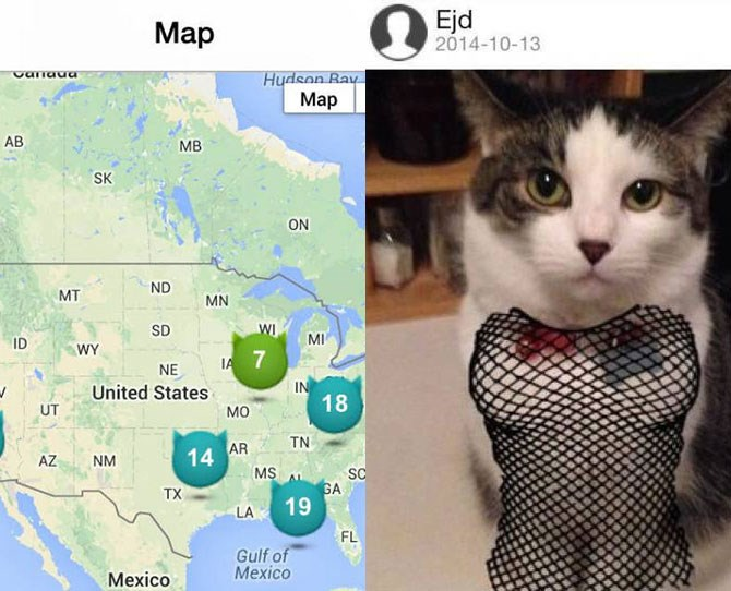 """If you're a cat lover, you're probably all too familiar with wanting to meet likeminded cat people. You know, someone to swap cat pics with and who won't freak out when your beloved pet springs from the floor to their face.  Enter: [Tag A Cat](https://itunes.apple.com/au/app/tag-cat-cat-pictures-sharing/id879287051?mt=8 target=""""_blank""""), which is basically Tinder for cats. The app lets you share and compare cat photos with other cat-lovers in your area."""