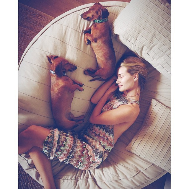 11. She'd choose dogs over cats any day. PS How cute are her pooches?!