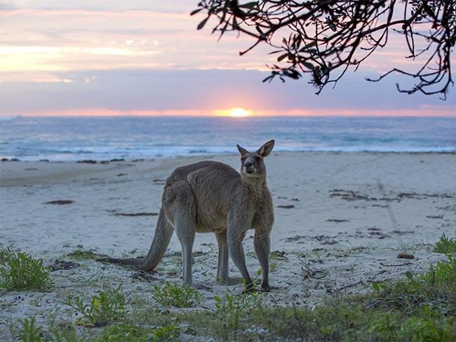 21 reasons we're proud to call Australia home