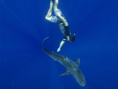 See Zac Efron hitch a ride with a tiger shark