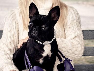 Lady Gaga's dog is legit now a model for Coach