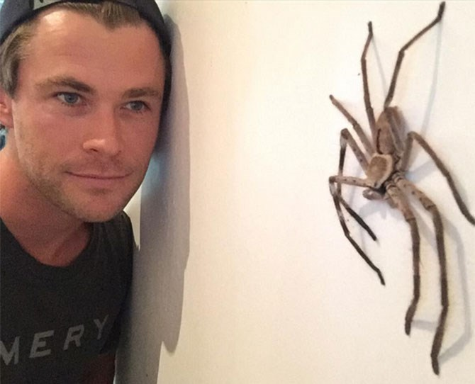 And Chris posing next to a MASSIVE F*CKOFF SPIDER. Thank goodness his ~dreamy~ face is in this picture...