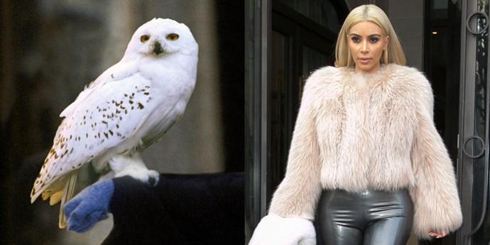 **Hedwig**