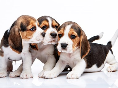 Uber are delivering puppies today!