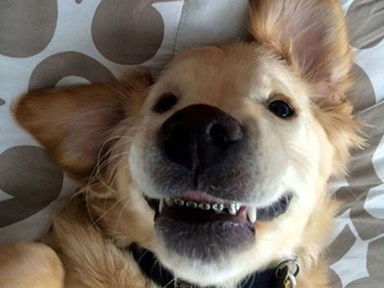 This puppy with braces will absolutely slay you