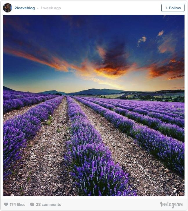 "**3. LAVENDER FIELDS, PROVENCE, FRANCE   **The south of France has some incredible sights to see (and smell), one being the [lavender fields of Provence.](http://www.provenceguide.co.uk/explore/lavender-38-1.html|target=""_blank"") Top tip: After taking a stroll through the fragrant fields, stop by a local ice cream shop to try some lavender sorbet."