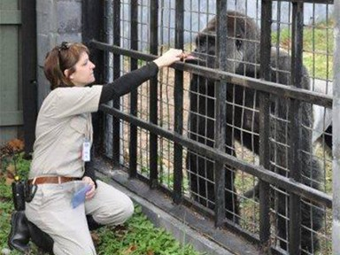 Zookeeper weighs in on Harambe killing, raises some pretty interesting points