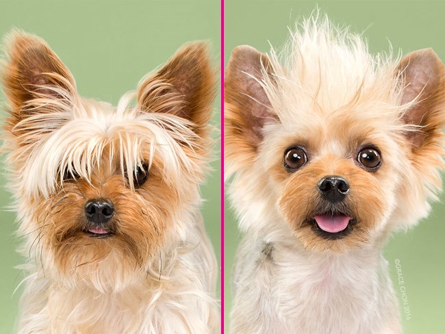 dogs before after haircuts