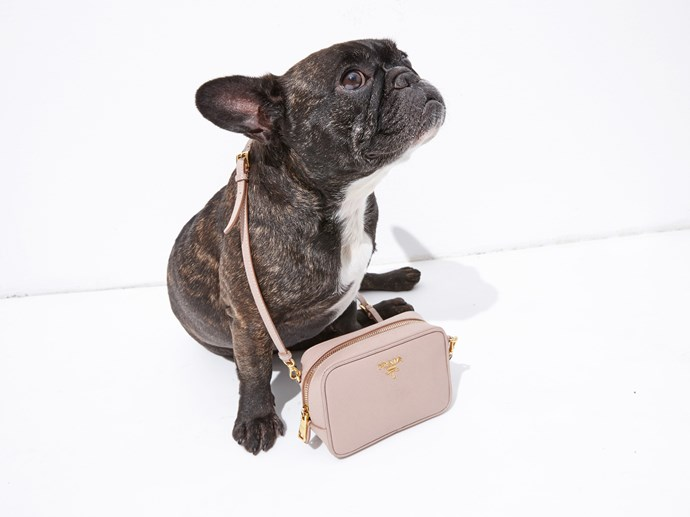 Day 7: This <strong>Prada </strong>mini-bag is man's (and Ninja's) best friend.