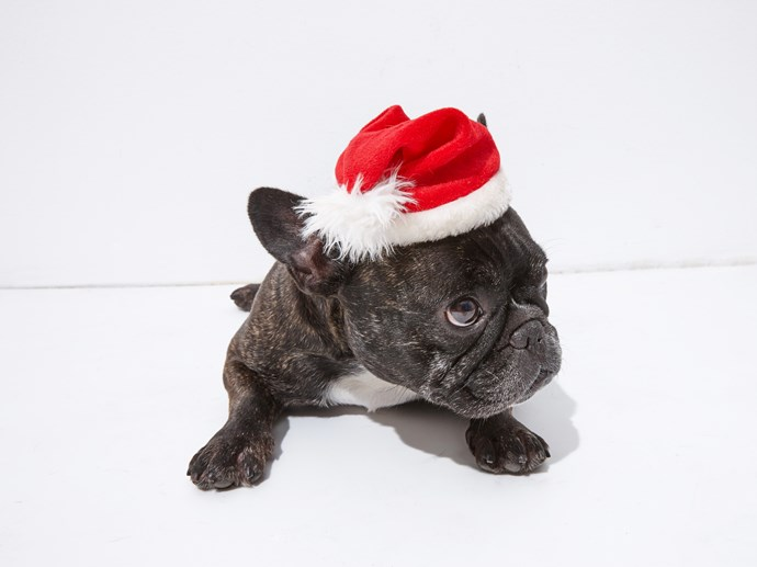 """Day 8: Ninja's made a list and checked it twice, now it's time for some eggnog. Merry Christmas, from Ninja and the ELLE team! <br><br> Follow Ninja on Instagram at <a href=""""http://www.instagram.com/naughtybyninja"""">@naughtybyninja</a>"""
