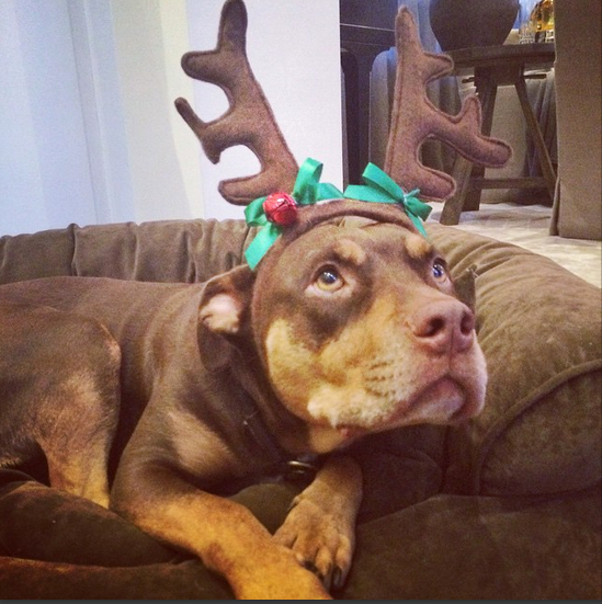 <strong>Gisele Bundchen</strong><br> The Brazilian supermodel and family hung out at home for Christmas, dressing up their dog, making Father Brady wear a Santa hat and sitting by the tree waiting for the big man to come. Even the dog is good looking... <br><br> Instagram: @giseleofficial
