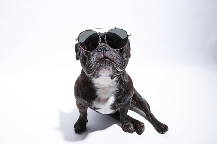 """""""Karl owns 300 iPods; Ninja owns 300 pairs of sunnies"""" <br> @_naughtybyninja wears; Sunglasses, $229.95, Epokhe, <a href=""""http://www.epokhe.co/collections/eyewear/products/xoa-silver """">epokhe.co</a>"""