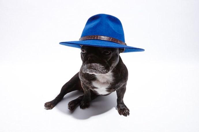 """""""My own take on Pharrell's look"""" <br> @_naughtybyninja wears; Hat, $99.95, FallenBROKENstreet, <a href=""""http://www.fallenbrokenstreet.com/shop/new-the-dingo-royal-blue """">fallenbrokenstreet.com</a>"""