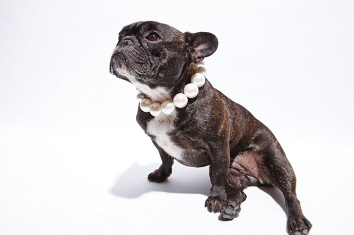 """""""They shall call this, 'Frenchie in a Pearl Collar'"""" <br> @_naughtybyninja wears; Necklace, $14.95, H&M, hm.com/au"""