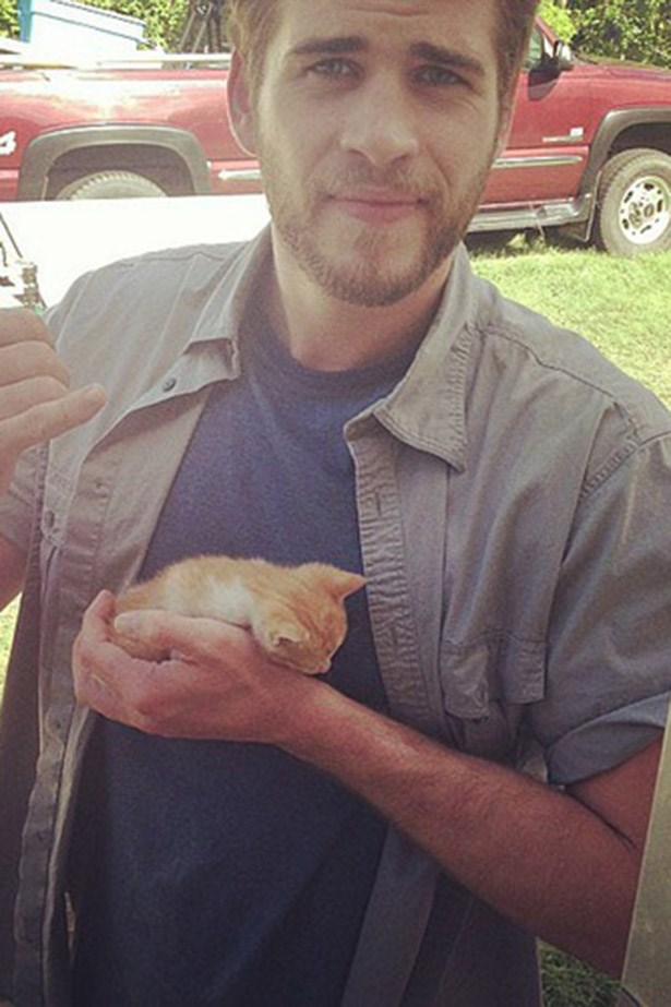 So it's not a lady, but it's Liam Hemsworth! Holding a tiny kitten! Image via Instagram.
