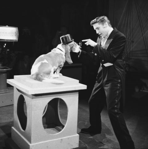 """ELVIS PRESLEY """"I didn't mean that 'ain't nothing but a hound dog' comment to be a bad thing!"""" GETTY"""
