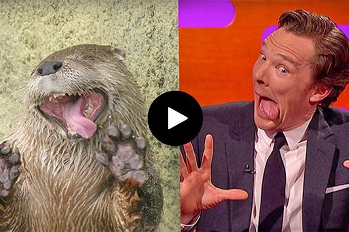 Benedict Cumberbatch Aces Otter Impersonation On Graham Norton Show