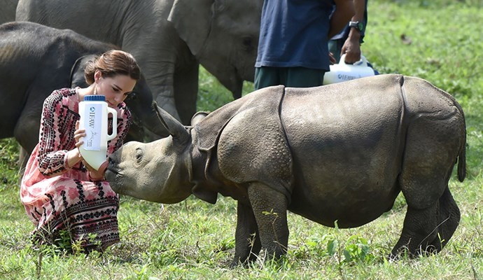 Here, Kate is seen feeding a orphaned baby rhino and simultaneously auditioning for a part in the next live-action Disney princess film.