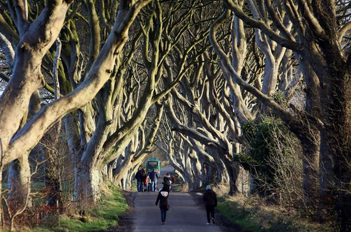 </strong>GO VISIT: DARK HEDGES, NORTHERN IRELAND</strong> <br><br> You can take a walk through beautiful beeches on this picturesque road in Northern Ireland. The trees that line the passageway were first planted in the 18th century.