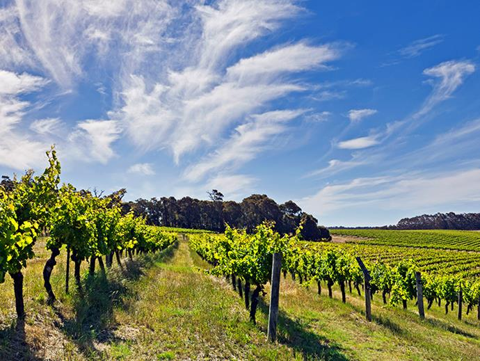 """<strong>Perth to Margaret River.</strong> <br><br>WA is made for a gourmet getaway. Go via Dunsborough to check out the 'gram-worthy Bunker Bay and then head down to Margaret River to share some more magical moments with your MVP at <a href=""""http://evansandtate.com.au/"""">Evans & Tate</a> winery. Insider tip: visit in November for the <a href=""""http://www.gourmetescape.com.au/programme/"""">Margaret River Gourmet Escape 2016</a>. Beach BBQs and sundown soirées? In."""