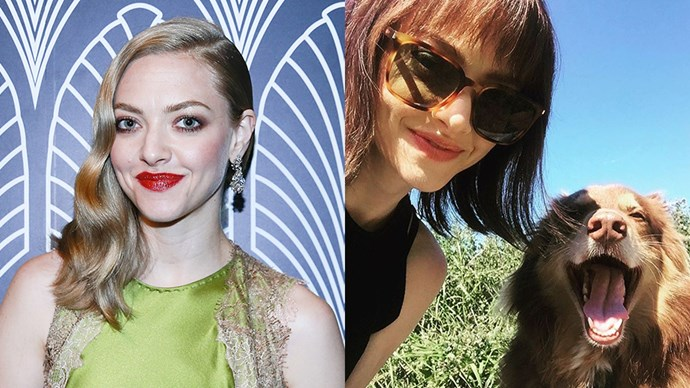 """<p> <strong>Amanda Seyfried</strong></p> <p>Amanda Seyfried has gone to the short, dark side, as seen in this snap with her dog posted on her <a href=""""https://www.instagram.com/p/BJl9fp3h1zr/"""" target=""""_blank"""">Instagram account</a>! But it appears to be temporary as in a previous photo she alluded to a wig.</p>"""