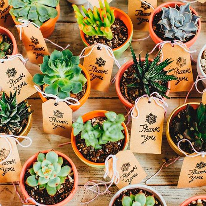 """<p> Plants<p> <p> Whether they're tiny pots of rosemary or varied succulents, plants are a great lasting gift. <p> Via <a href=""""http://www.100layercake.com/blog/2015/02/02/colorful-austin-texas-wedding-ribbons-balloons-wedding-decor/"""">100 Layer Cake</a>."""