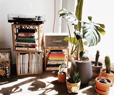 A Beginners Guide To Indoor Greenery