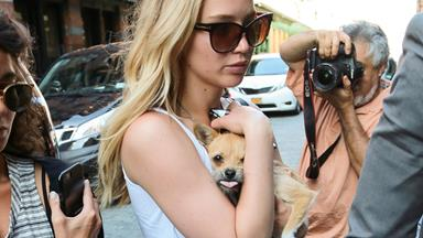 Don't Touch Jennifer Lawrence's Dog: A Cautionary Tale