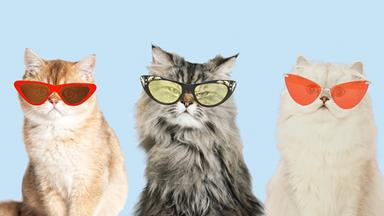 Cat-Eye Sunglasses Are The New Wave Of Retro Must-Haves