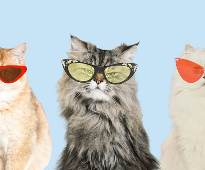 Cats with sunglasses.