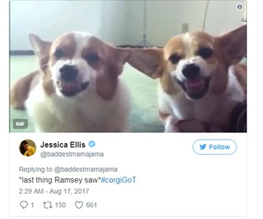 'Game Of Corgis' Is The Twitter Account Every 'Game Of Thrones' Fan Needs To Follow Right Now