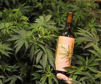 Rebel Coast marijuana wine.