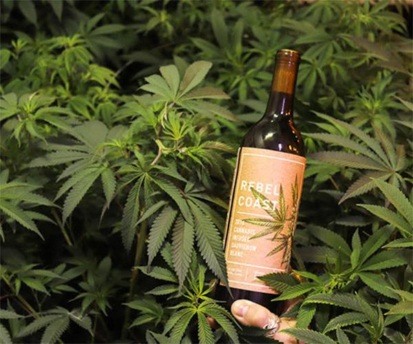 Rebel Coast marijuana wine.