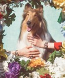 Gucci's New Collection Is Inspired By Puppies