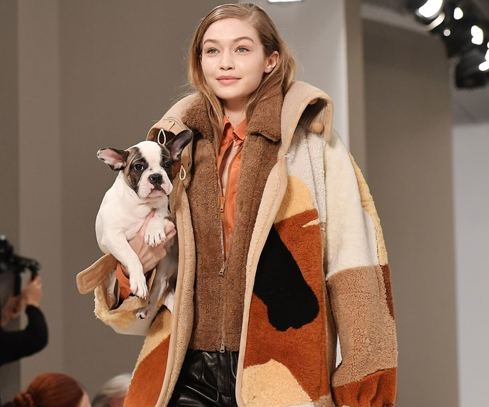 According To Tod's, Puppies Will Be Next Season's Most Coveted Accessory