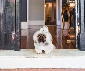 dog cat and pet friendly hotels in australia