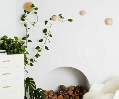 The Right Indoor Plant For Every Room In Your Home